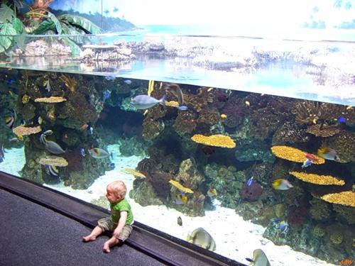 Внутри аквариума Барселоны