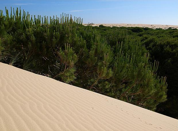 Дюны парка Доньяна