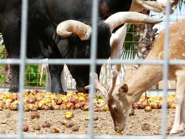 Зоопарк Севильи. Фото