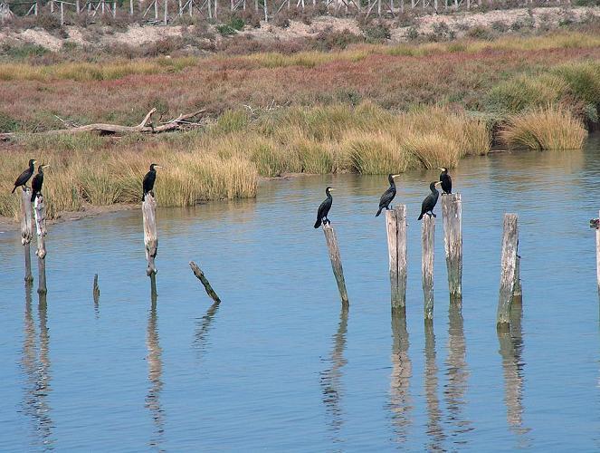 Птицы в парке Доньяна