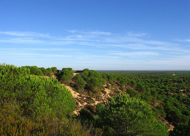 Растительность парка Доньяна