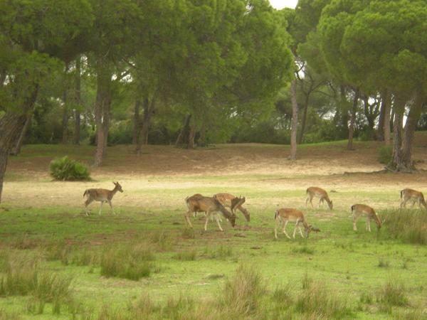 Фауна национального парка Доньяна