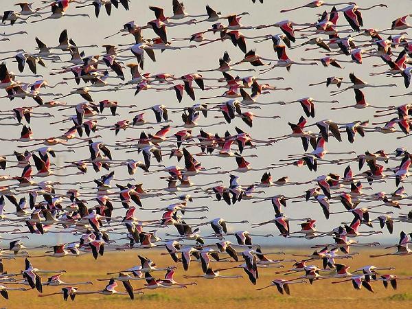Фламинго в Доньяне