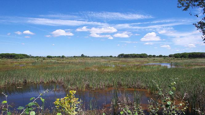 Фото болот в парке Доньяна