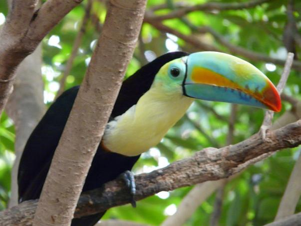 птицы в севильском зоопарке