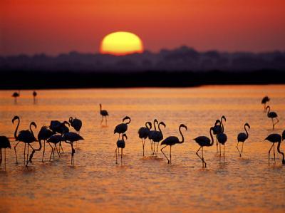 Фламинго в озерах парка Доньяна